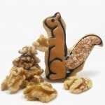 squirrel cookies for Fall - the decorated cookie