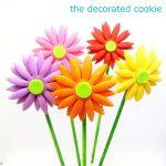 gerbera daisy cookie pops