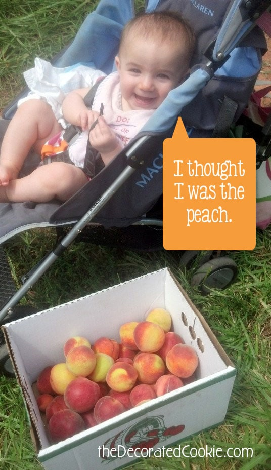 peachpicking_v