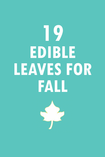 roundup of 19 edible leaves for FALL