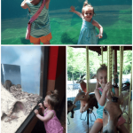 clockwise: nothing swimming in the tank today, riding the carousel, at the small mammal house