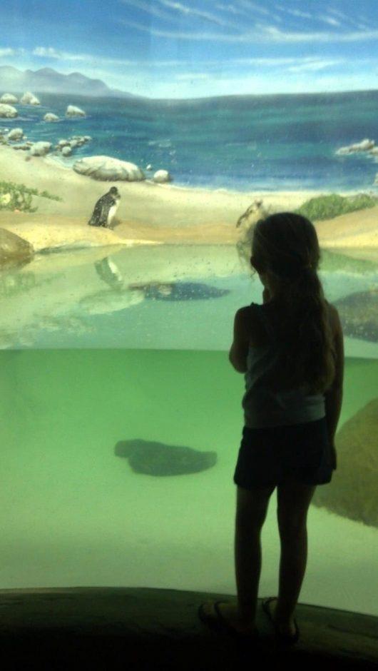 maeve_NJ_aquarium