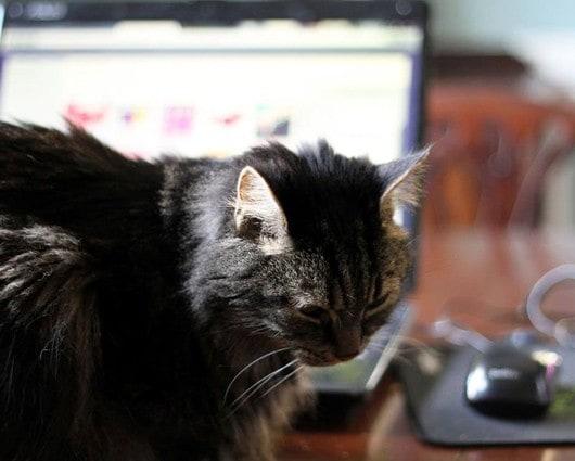 on losing a beloved pet