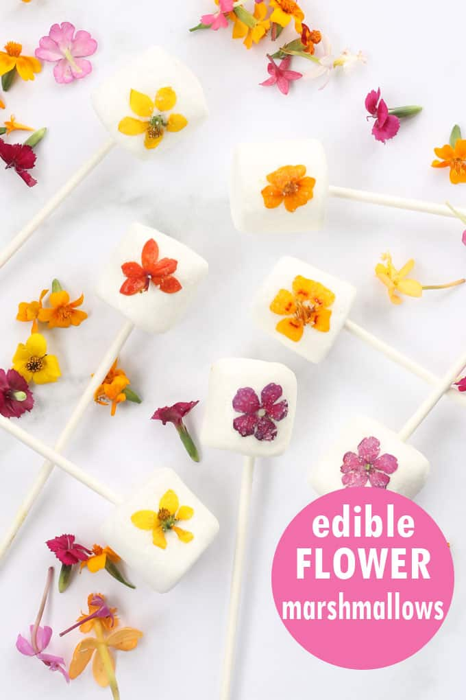 Edible flower marshmallow pops are a beautiful, easy treat to make for Spring, Easter, Mother's Day or any day. #MothersDay #EdibleFlowers #marshmallows